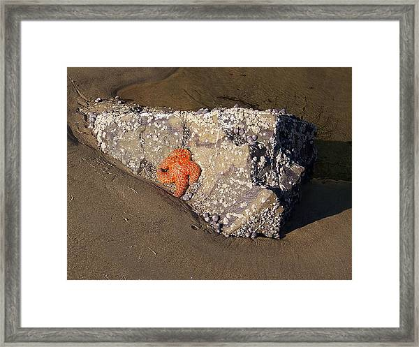 Sunbathing Framed Print by Angi Parks