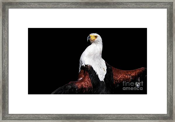 Sunbathing Eagle Framed Print