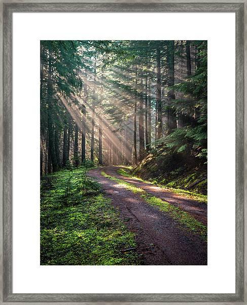 Sunbeam In Trees Portrait Framed Print