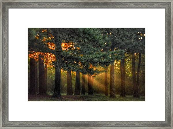 Sunbeams Through The Trees Framed Print