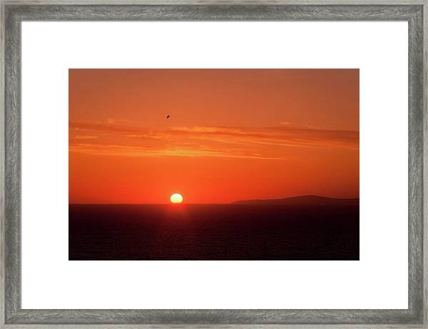 Sunbird Framed Print