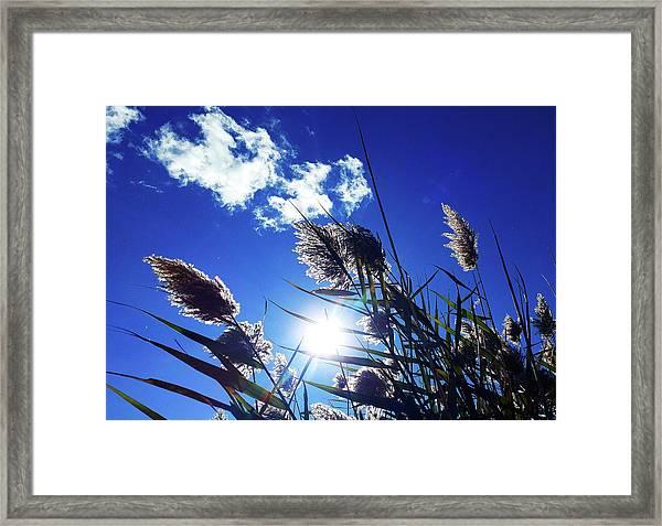 Sunburst Reeds Framed Print