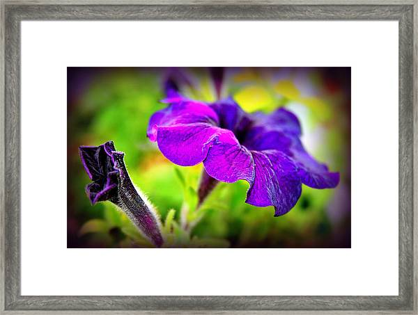 Suncatcher Sapphire Framed Print