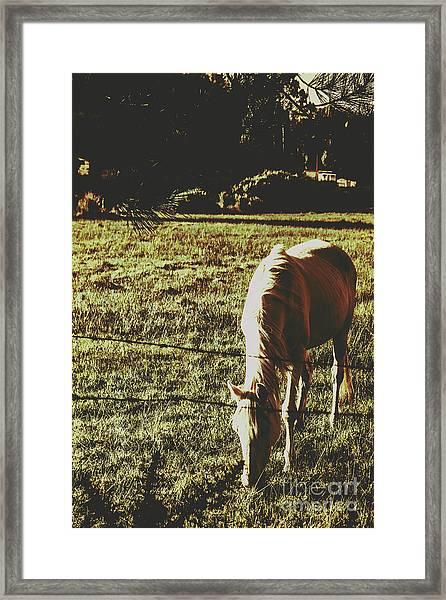 Sundown Horse Meadow Framed Print
