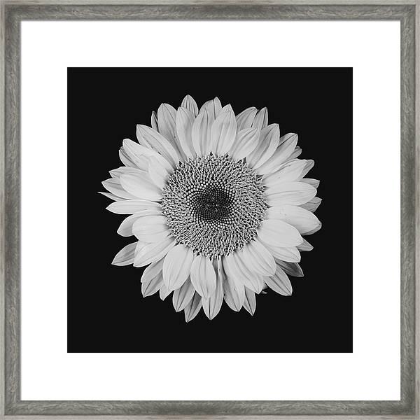 Sunflower #10 Framed Print