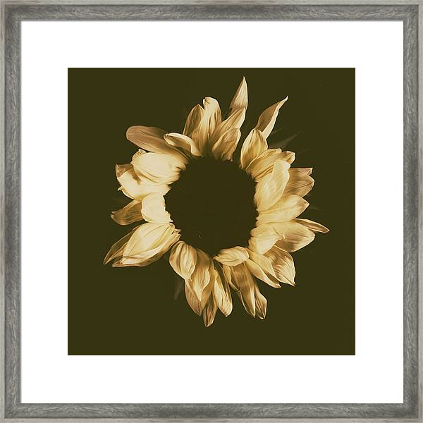 Sunflower #3 Framed Print