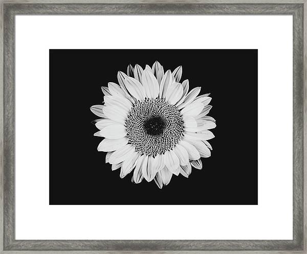 Sunflower #8 Framed Print