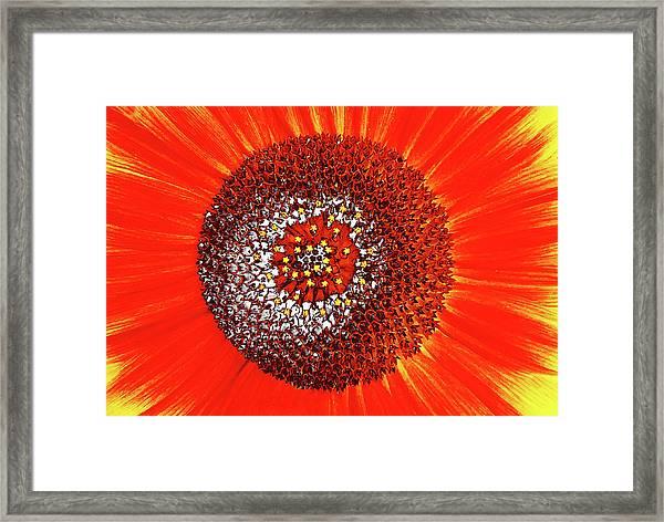 Sunflower Close Framed Print