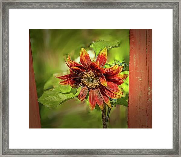 Sunflower #g5 Framed Print