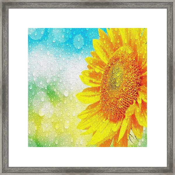 Sunflower In A Sunshower Framed Print
