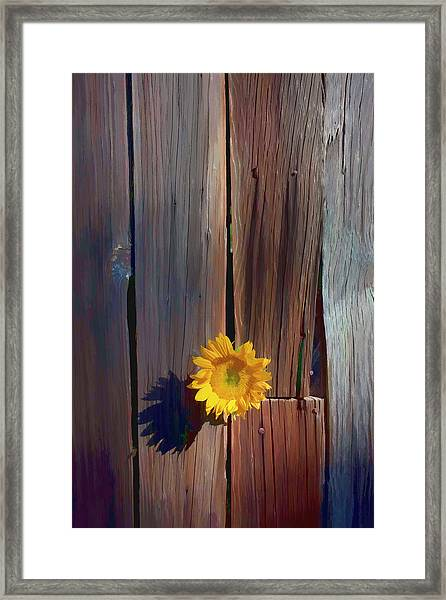 Sunflower In Barn Wood Framed Print