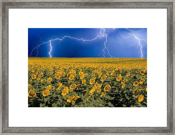 Sunflower Lightning Field  Framed Print