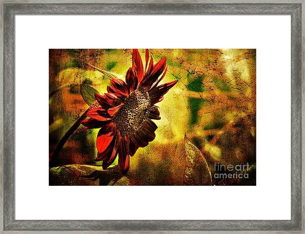 Framed Print featuring the photograph Sunflower by Lois Bryan
