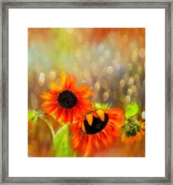 Sunflower Rain Framed Print