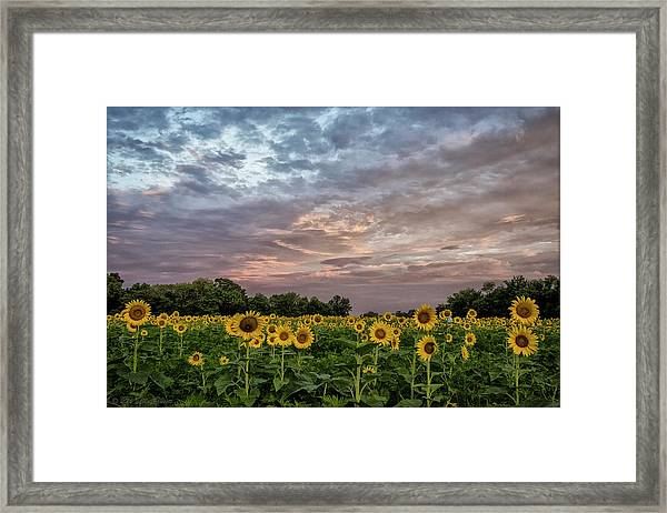 Sunflower Sunrise Framed Print