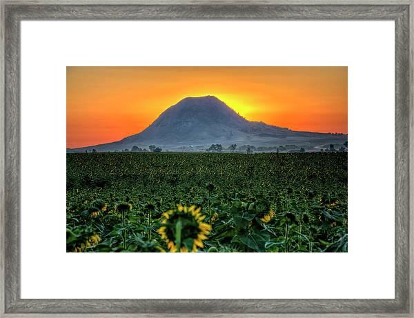 Sunflower Sunrise Framed Print