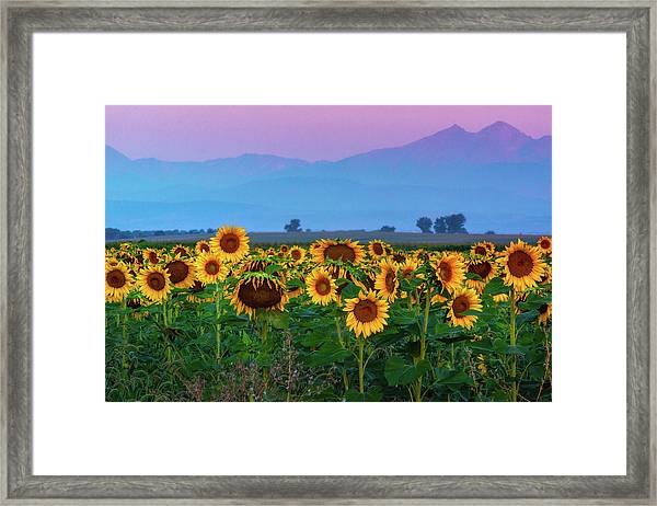 Framed Print featuring the photograph Sunflowers At Dawn by John De Bord