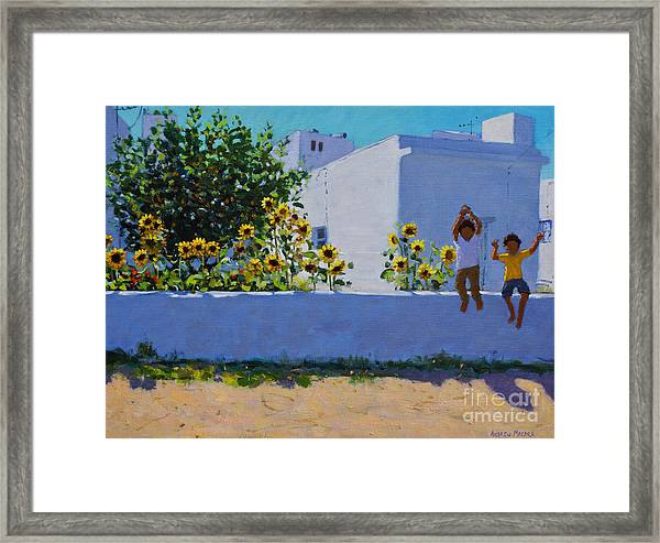 Sunflowers, Morning, Galicia Framed Print