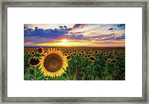 Framed Print featuring the photograph Sunflowers Of Golden Hour by John De Bord