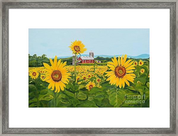 Sunflowers On Route 45 - Pennsylvania- Autumn Glow Framed Print