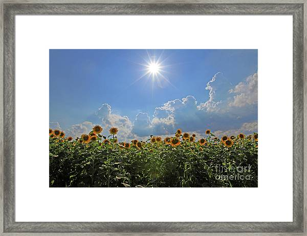Sunflowers With Sun And Clouds 1 Framed Print