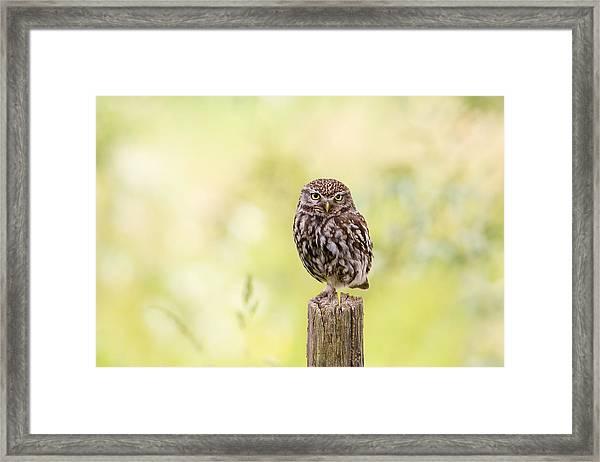 Sunken In Thoughts - Staring Little Owl Framed Print