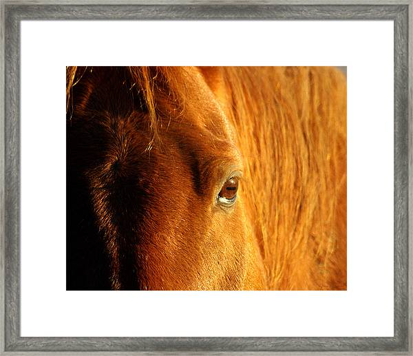 Sunlight Eyes Framed Print