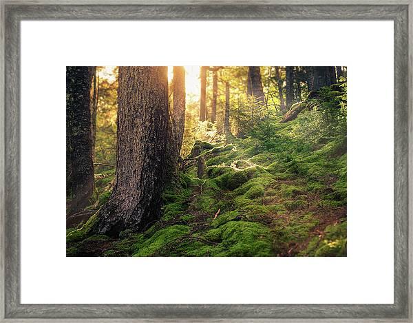 Sunlight In The Forest Framed Print