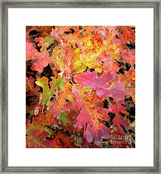 Sunlight Leaves Framed Print