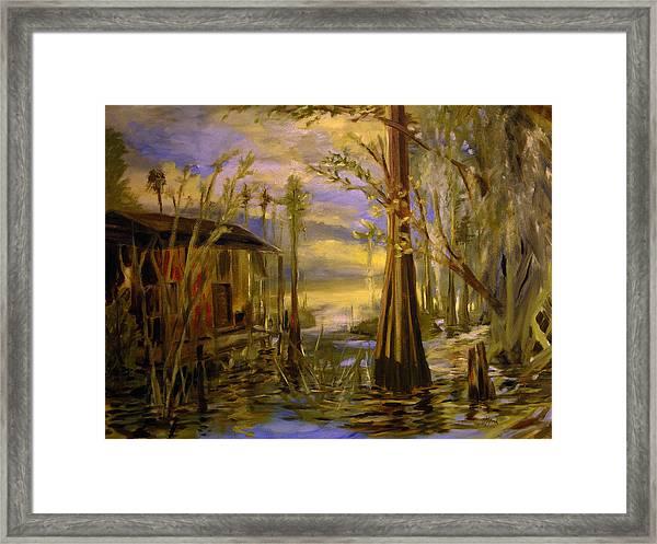Sunlight On The Swamp Framed Print