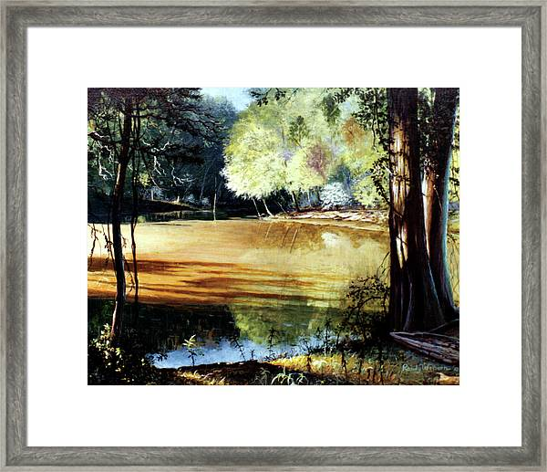 Sunlight On Village Creek Framed Print