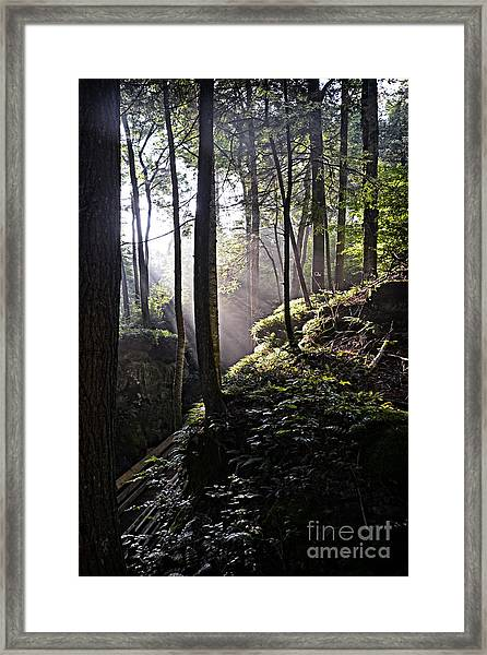 Sunlight Through Trees At Beartown State Park 3129c Framed Print