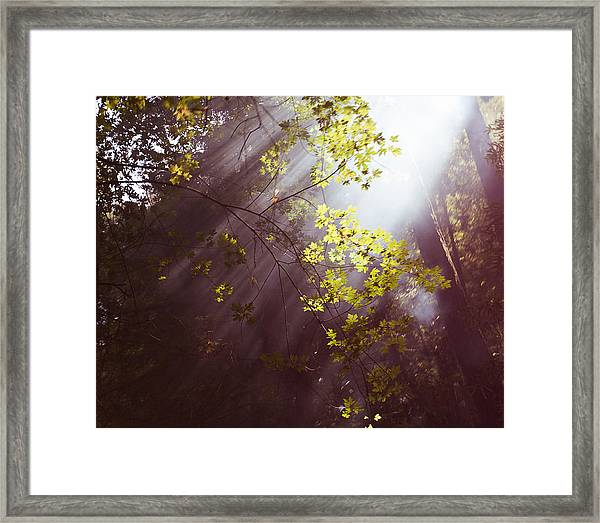Sunlit Beauty Framed Print