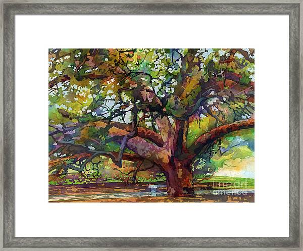 Sunlit Century Tree Framed Print