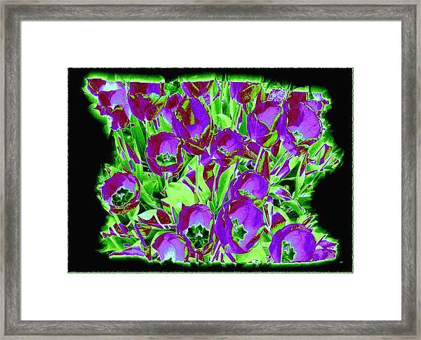 Sunlit Country Tulips Framed Print