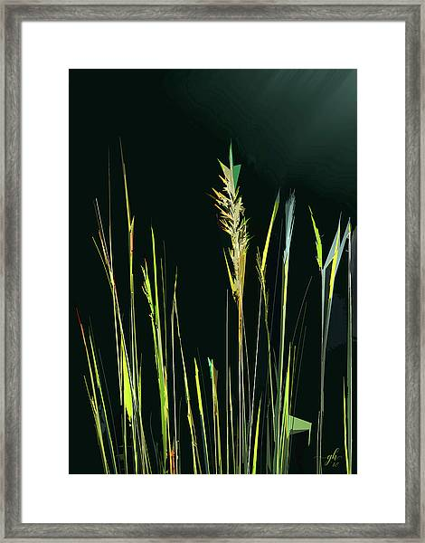 Framed Print featuring the digital art Sunlit Grasses by Gina Harrison