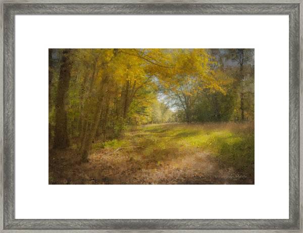 Sunlit Meadow In Borderland Framed Print
