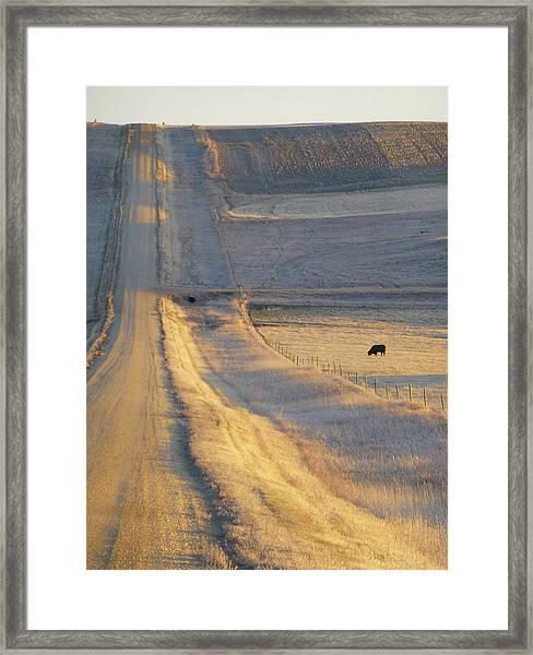 Sunlit Road Framed Print