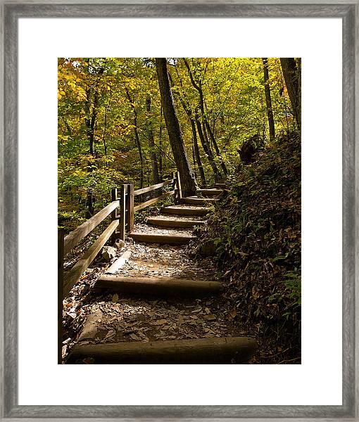 Sunlit Trail Framed Print