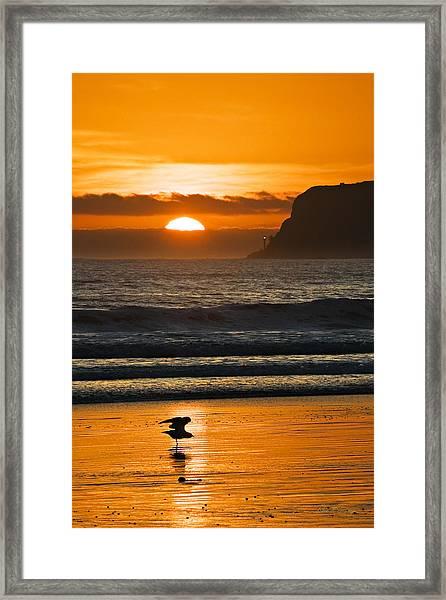 Sunny Delight Framed Print