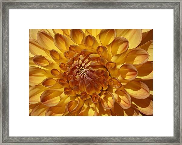 Sunny Delight Framed Print by Monnie Ryan