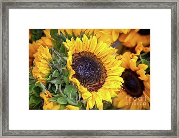 Framed Print featuring the photograph Sunny Face by Susan Cole Kelly