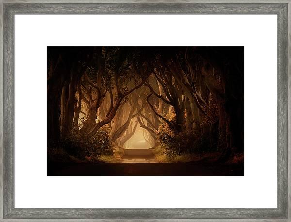 Sunny Morning In Dark Hedges Framed Print