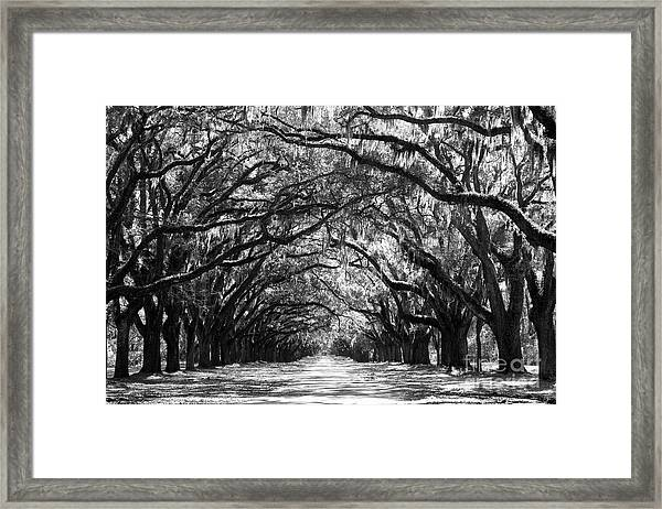 Sunny Southern Day - Black And White Framed Print