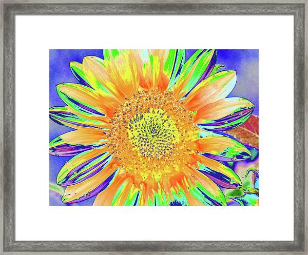 Sunrazzler Framed Print