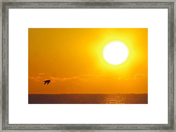 Sunrise And Bird Framed Print