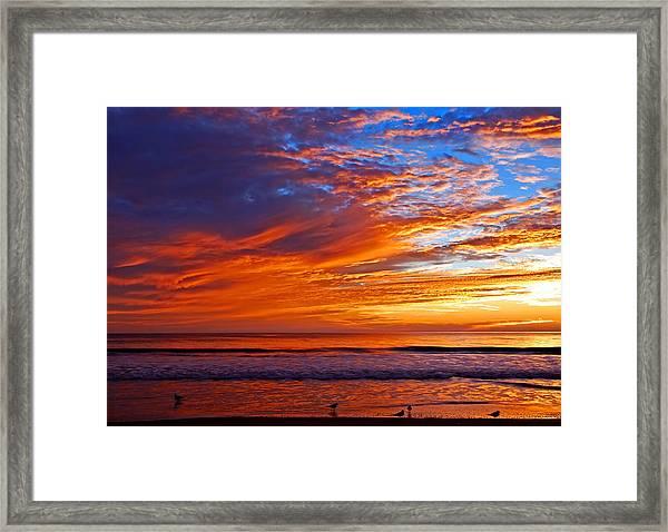 Sunrise And Seagulls Framed Print