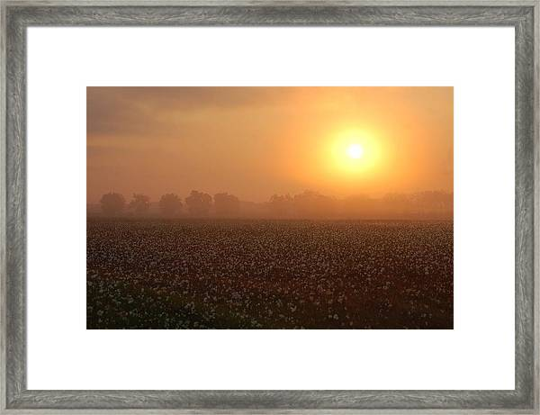Sunrise And The Cotton Field Framed Print