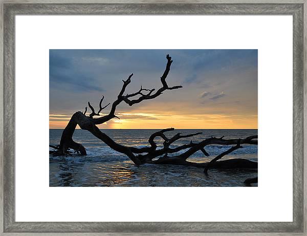 Sunrise At Driftwood Beach 1.2 Framed Print