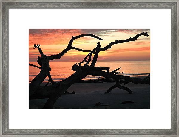 Sunrise At Driftwood Beach 3.1 Framed Print